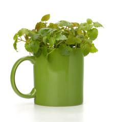 Herbal peppermint tea cup