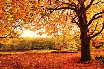 Wall Murals Orange Glow Beautiful Autumn in the park