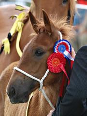Champion Foal