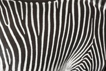 Textura de la piel de una cebra.