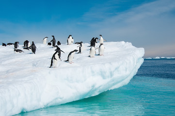 Papiers peints Antarctique Adelie penguins jumping from iceberg