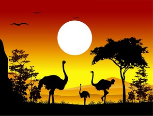 beauty ostrich silhouettes with landscape background