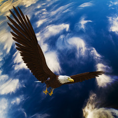 Fototapete - eagle in deep blue