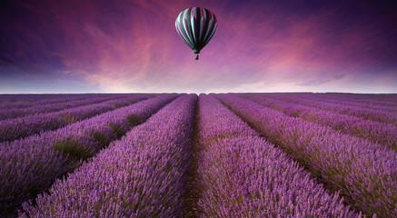 Stunning lavender field landscape Summer sunset with hot air bal