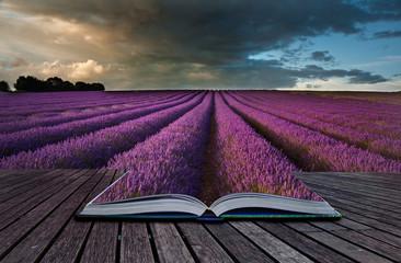 Printed kitchen splashbacks Eggplant Creative concept image of lavender landscape in pages of book