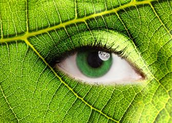 Wall Mural - Leaf eye