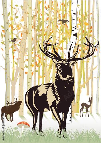 Fototapete Hirsche und Reh im herbstlichen Wald