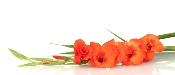 branch of orange gladiolus on white background close-up