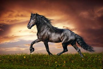Wall Mural - Black Friesian horse trot