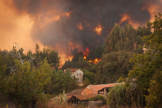 Forest Wild fire near houses on Portugal Summer
