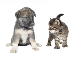 Cute puppy and  cat