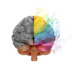 Creativity cerebral hemisphere concept