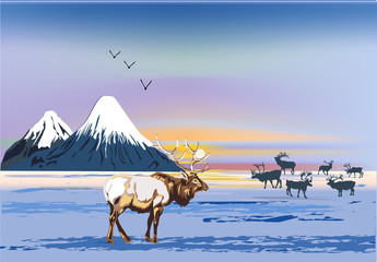 winter landscape with deers near mountains