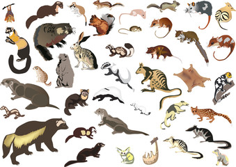 large collection of small animals Wall mural