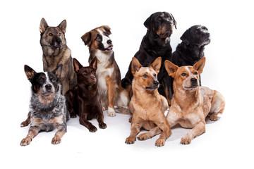 Hundegruppe gemischt - Acht Hunde