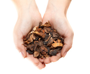 Hands with heap of dried mushrooms isolated on white background