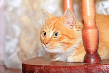 redhead kitty