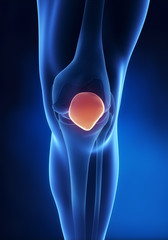 Knee patella anatomy anerior view