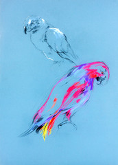 Sketch of a  parrot