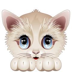 Printed kitchen splashbacks Cats Cute Kitten Cartoon Character-Gatto Gattino Cucciolo-Vector