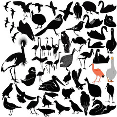birds on a white background, isolated vector