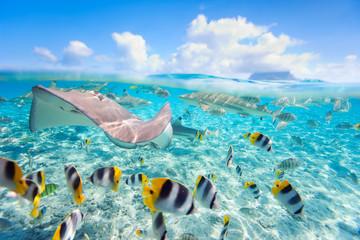 In de dag Onder water Bora Bora underwater
