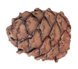 Cedar cone, isolated