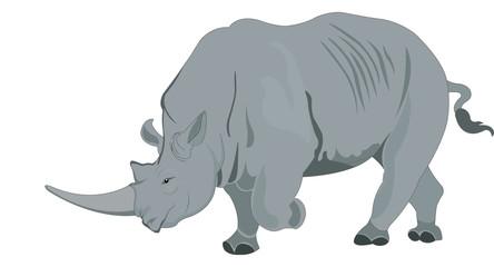 Rhinoceros or Rhinocerotidae, illustration