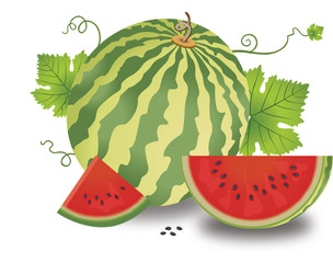 Watermelon, illustration