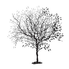Tree silhouette. The trunk and leaves in separate layers. Vector