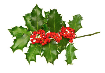 christmas decoration holly with red berries