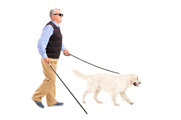 Blind man moving with walking stick and his dog