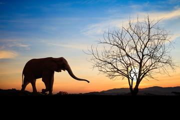 Silhouette elephants over sunset