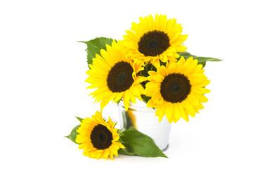 Beautiful sunflowers in a bucket (Helianthus)