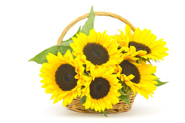 Beautiful sunflower bouquet in a basket