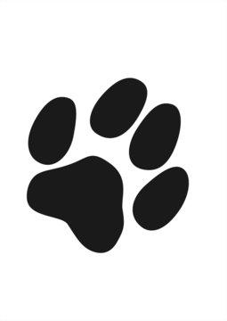 Katzenpfote grau