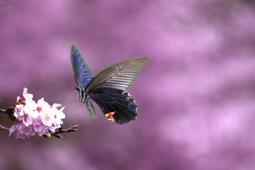 Beautiful butterfly on the flower for adv or others purpose use