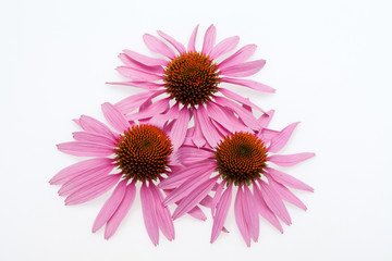 Pink coneflower head, isolated on white background Wall mural
