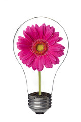 light bulb with pink flower inside