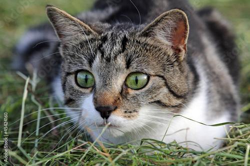 """""""Junge Katze Kurz Vor Dem Angriff"""" Stockfotos Und"""