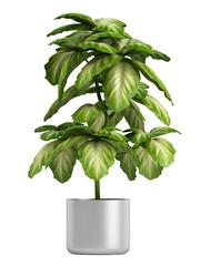 Fresh branchy home plant