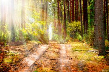 Fototapete - Autumn Forest