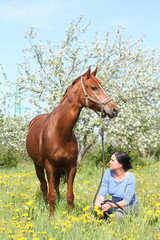 Woman and chestnut horse at the blooming field