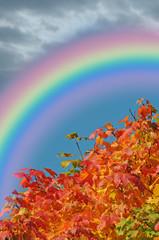 Regenbogen am wundervollen Herbsttag