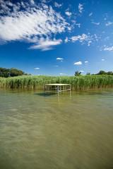 reed in lake