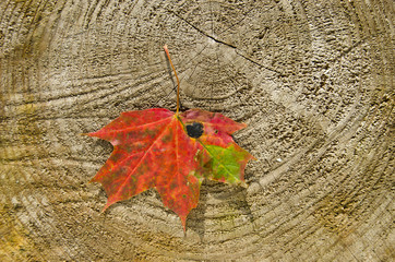 red maple leaf on wooden background