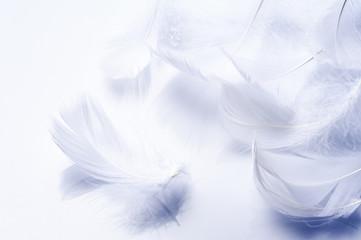 白背景に複数の羽根