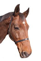 Head of Chestnut Horse