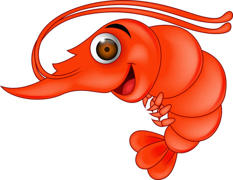 Funny shrimp cartoon