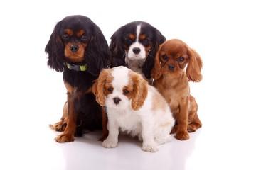 vier junge Hunde runter schauend